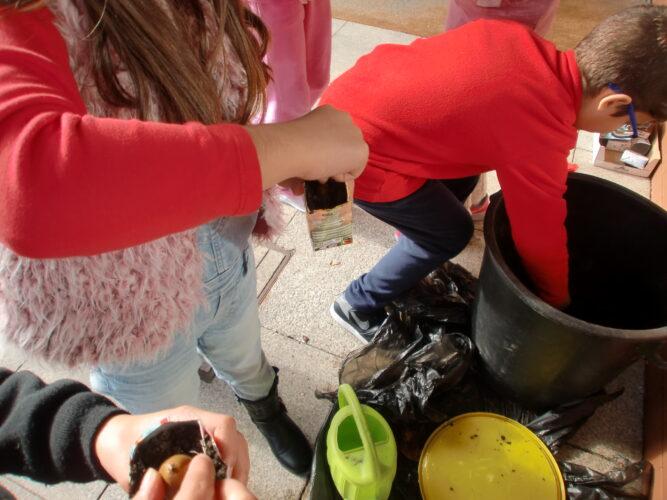 Os alunos semeiam bolotas de carvalho em pacotes Tetra Pack