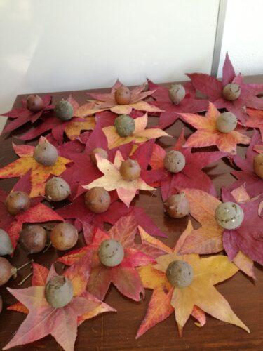 Primeiro foi preciso recolher na escola as folhas e os bugalhos depois limpá-los!